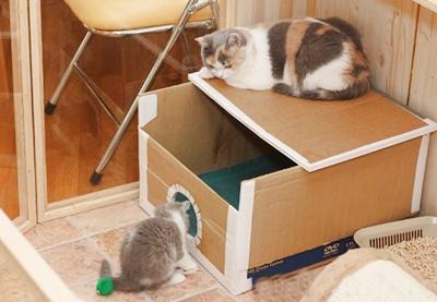 Как сделать домики для кошек из коробки 89