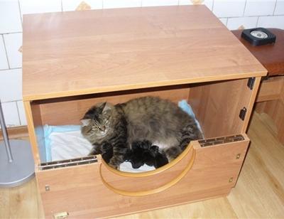 Первые 2-3 дня некоторые кошки